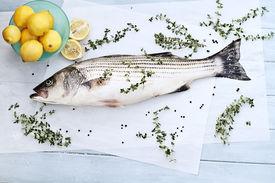 pic of striper  - Freshly caught striped bass being prepared for dinner - JPG