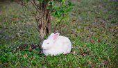 White Rabbit In The Garden