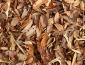 Dried Tree Leaves Texture