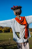 stock photo of scarecrow  - Scarecrow in a field on a sunny day - JPG