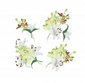 Lilies and tiger orchids bouquet vector design elements