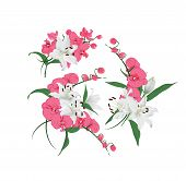 Lilies and pink orchids bouquet vector design elements