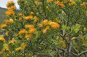 Orange Flame Pincushion