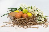 Easter eggs on a nest of spring flowers