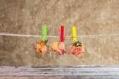 picture of dead-line  - Three dry rose hanging on line on wooden background - JPG
