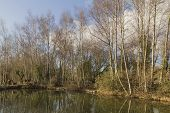 Woodland Waters