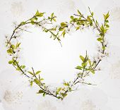 heart shape from cherry tree flowers isolated on white background