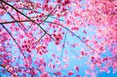 Beautiful pink flower blossom