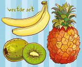Vector Set With Banana, Kiwi, Pineapple