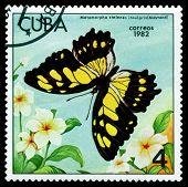 Vintage  Postage Stamp.  Metamarpha Stelenes Insularis.