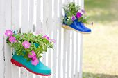 Ornamental Petunia Flowers Plant In Shoes Hanging On Fance.