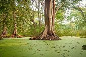 Green water algae at bird sanctuaries lake