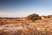 stock photo of atlas  - Landscape of Morocco at summer - JPG