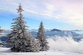 Snow-covered Fir On The Hillside