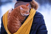 image of red back  - Woman with red cat on her back with snowfall background - JPG