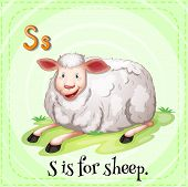 Illustration of a letter S is for sheep