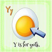 Illustration of a letter Y is for yolk