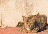 wild cat lie down on the footpath