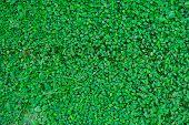 Green Leaf Plant Background On Backyard