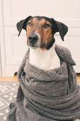 Cute dog in scarf
