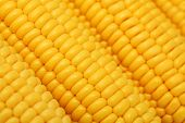Close-up View Of Ripe Corn On The Cob