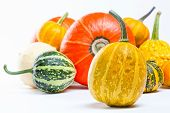 Colorful pumpkins. Halloween pumpkins.