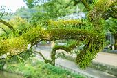 picture of parasite  - many green parasitic on tree trunk look abundant natural - JPG