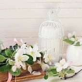 picture of caged  - Postcard with apple blossom decorative bird old books and candles in decorative bird cages on white painted wooden planls - JPG