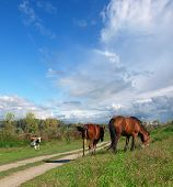 stock photo of pastures  - Two horses walking on the pasture - JPG