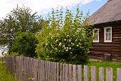 stock photo of jasmine  - Jasmine bush behind the fence and unpainted wooden house - JPG