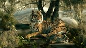foto of tigers  - 3d computer graphics of a tiger mother with two babies - JPG
