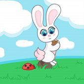 picture of ladybug  - Bunny with a toy sits on a rock in a clearing near the ladybug - JPG