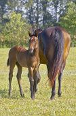 Mare And Foal 2