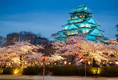 pic of night-blooming  - Osaka castle at night  - JPG