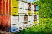 stock photo of beehive  - Vintage colorful beehive in a garden at sunny day - JPG