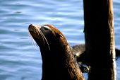 Pier 39 Seal