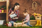 Cute child girl helps her mother to care for plants. Mother and her daughter engaged in gardening in poster