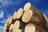 Logs de madeira de pinho
