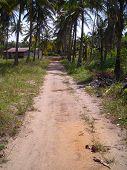Single Lane Path In Bintan Indonesia