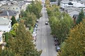 image of tree lined street  - tree lined residential street seattle washington usa - JPG