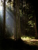 Syn Rays In The Wood