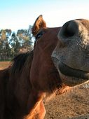 Horse Funny Face