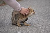 Woman Stroking Street Cat On Asphalt Road, Pets On The Street, Abandoned Animals, Cats, Animals In T poster