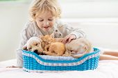 Child, Dog And Cat. Kids Play With Puppy, Kitten. poster