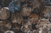 Deforestation. Fell Tree. Wood Texture Or Wood Background. Grunge Dark Abstract Wood Background. Old poster