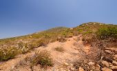 Vegetation Along A Desert Mountain Trail