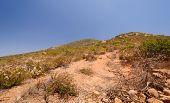 Vegetação ao longo de uma trilha de montanha do deserto