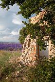 Old Provence shed in a lavender field glowing in the evening sun