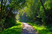 Misterious Shady Green Alley With Trees In The Park In Fulda, Hessen, Germany