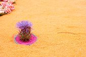 Island Of Flower In A Sea Of Sand
